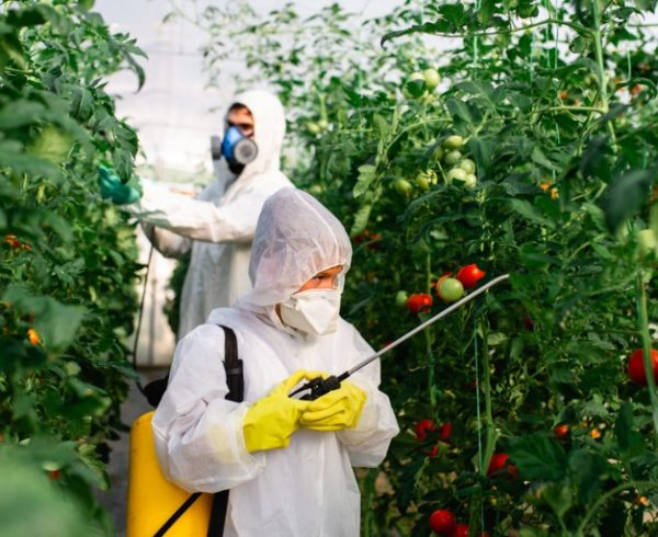 Pesticide Heart and Stroke Risk