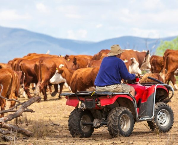 Q-fever-safety-farming